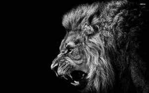 roaring-lion-animal_099022